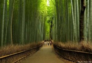 arashiyama-bamboo-groves-big
